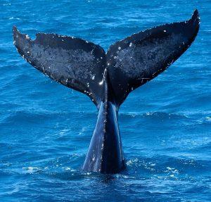 Dove nuotare con i delfini in Italia