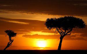 Qual'è il miglior safari in Africa