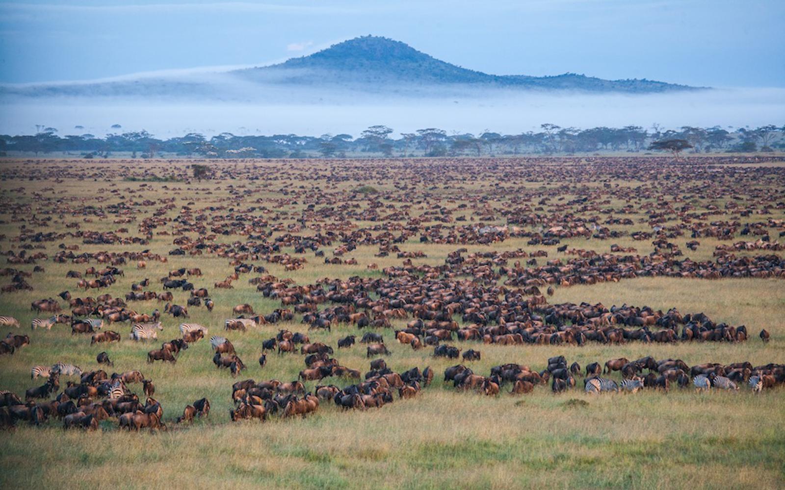 safari migrazione gnu