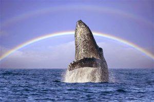 dove vedere le balene a dicembre