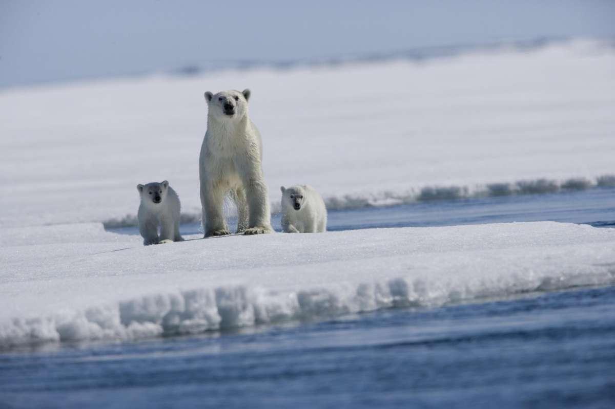 Quanto costa un viaggio al Polo Sud: il volo in aereo