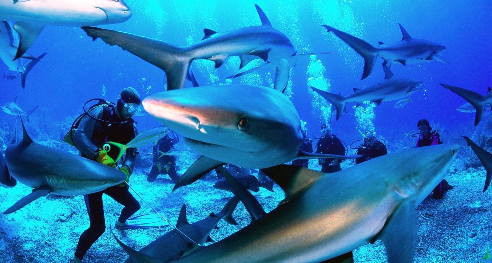 shark diving a Lampedusa