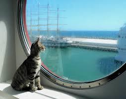 Quali sono regole per trasporto animali sul traghetto