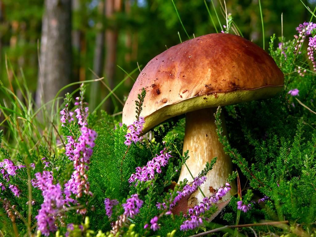 Quanti funghi si possono raccogliere