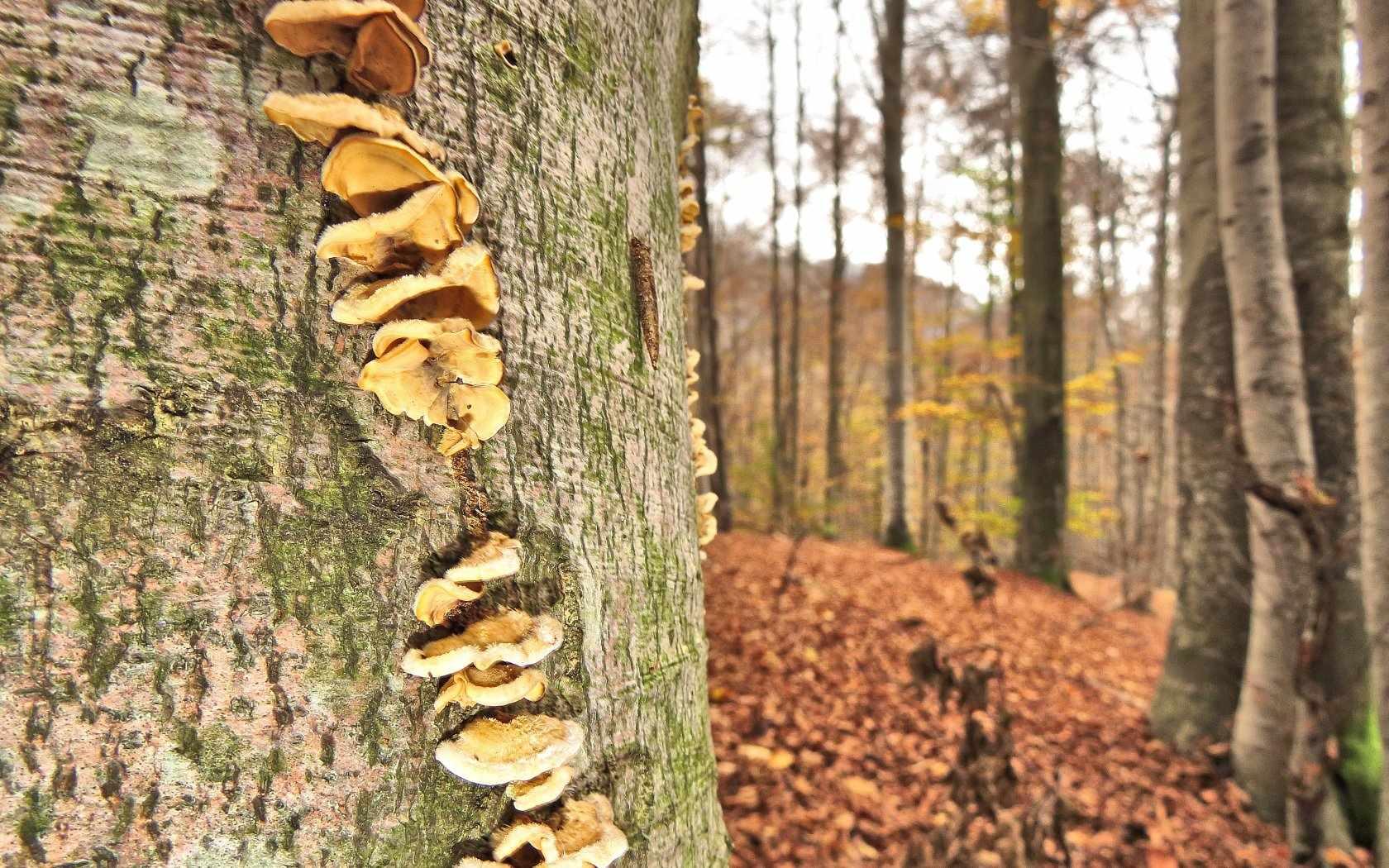 Cercare funghi in Valsesia dove e quando