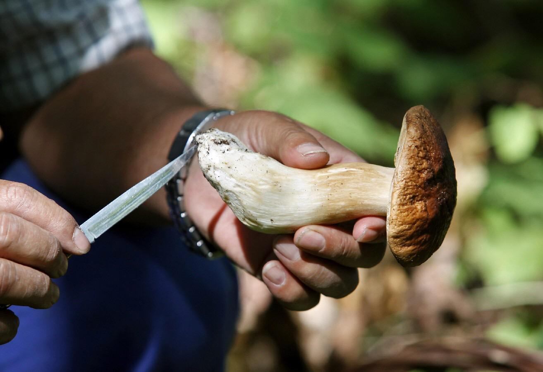Licenza per raccogliere funghi: come funziona
