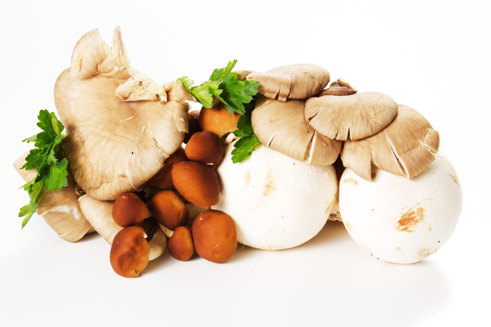 Dove trovare funghi in Valtellina