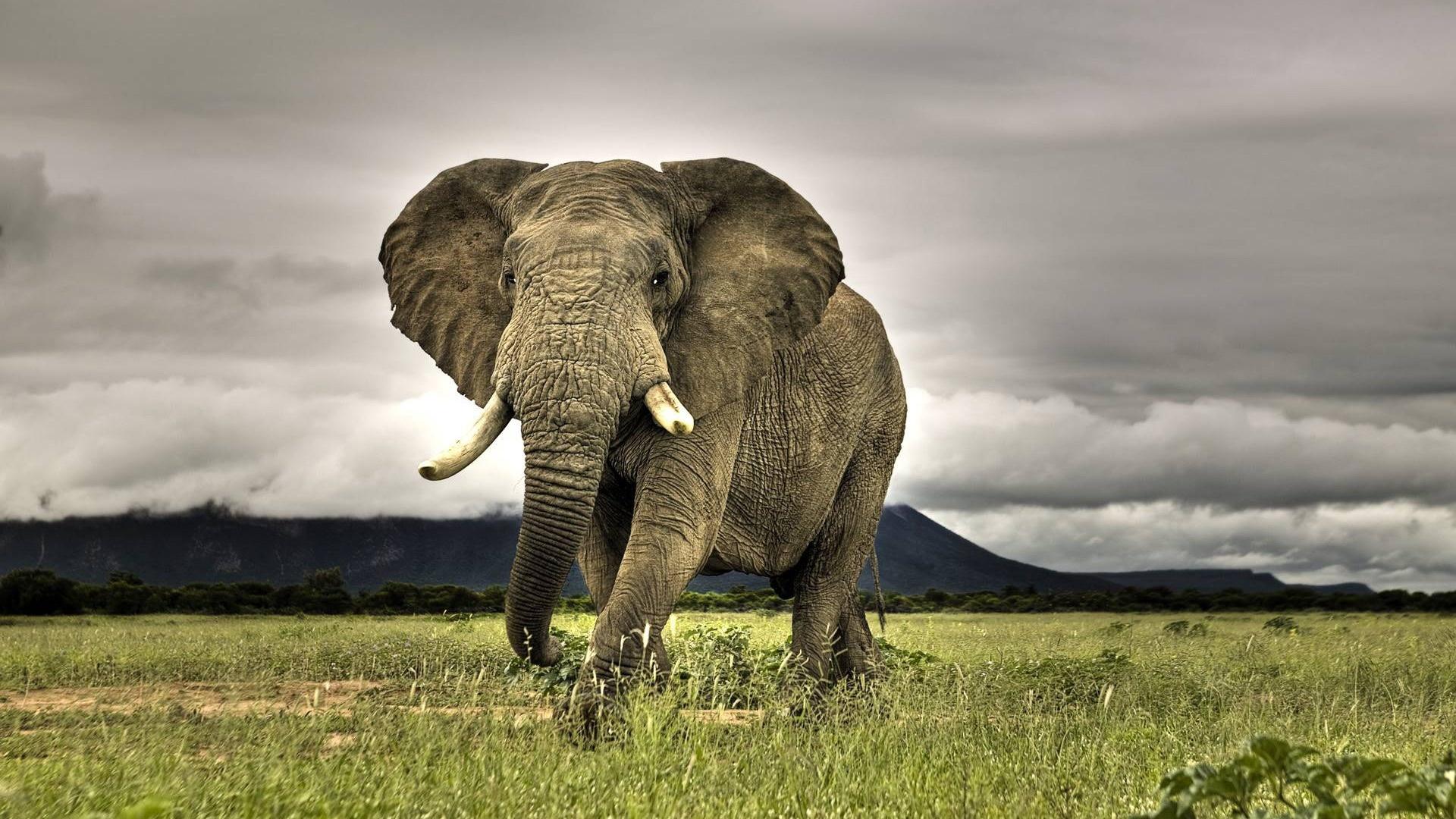 elefante_enorme