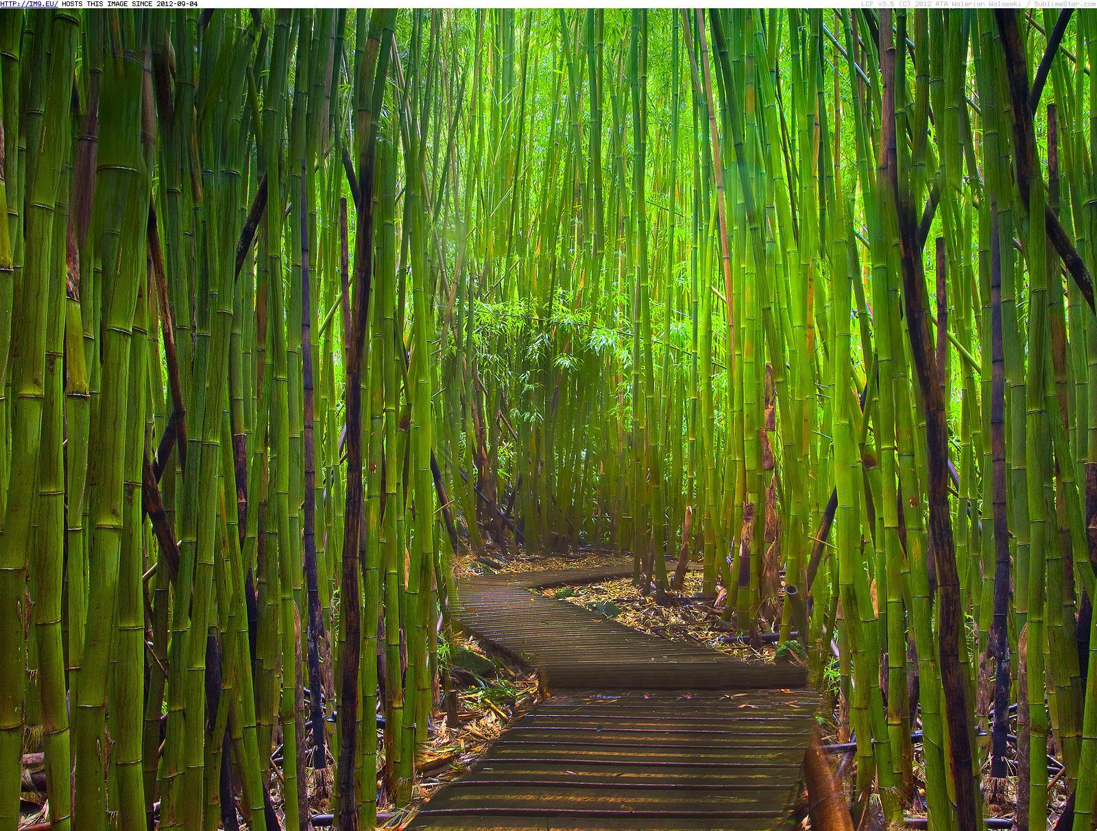 Felicità di Bambù