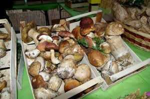 sagra-del-fungo-porcino-roma