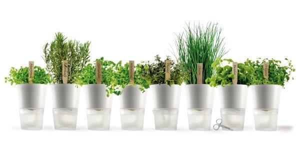 12 erbe da coltivare tutto l'anno solo con acqua