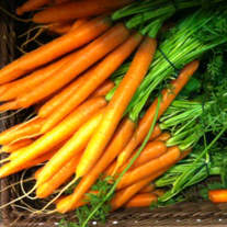 organic-carrots-low-nitrates