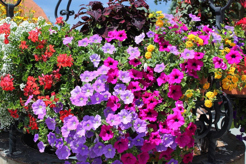 fiori a cascata in primavera