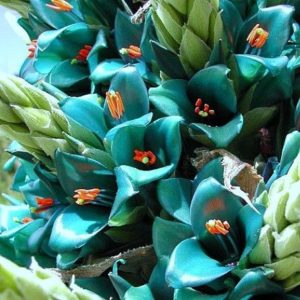 puya color tiffany