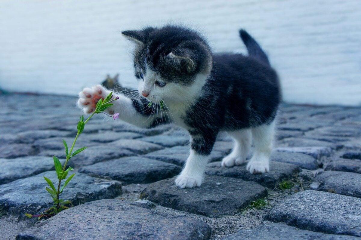 Come non far mangiare le piante al gatto